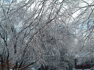 December 21–24, 2004 North American winter storm - Ice buildup in Columbus, Ohio