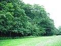 Deciduous woodland Almondell - geograph.org.uk - 1396667.jpg