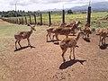 Deer Farm 1.jpg