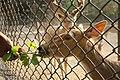 Deer Park Deer Eating.jpg