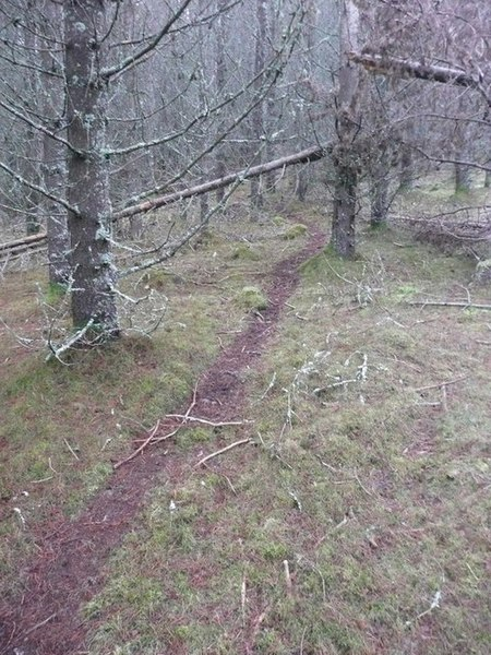 File:Deer track in forest - geograph.org.uk - 1605591.jpg