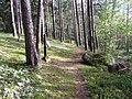 Degučių sen., Lithuania - panoramio (165).jpg
