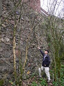 Rest der südöstlichen Burgmauer