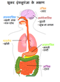 Diagram of swine flu symptoms HN.png