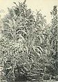 Die Pflanzenwelt Afrikas, insbesondere seiner tropischen Gebiete - Grundzge der Pflanzenverbreitung im Afrika und die Charakterpflanzen Afrikas (1910) (20914230126).jpg
