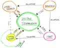Digitale Transformation Wissenschaft.png