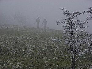 Disappearing into fog on Watlington Hill - geograph.org.uk - 298740.jpg