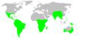 Distribution.dipluridae.1.png
