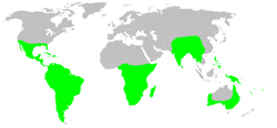 Distribution.dipluridae.1.png