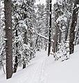 Divide Trail (39863971641).jpg