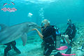 Dolphin Scuba Encounter.jpg