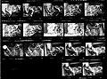 Dominoe's Alpo Fashion Shots (4215663933).jpg