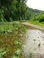 Donauversickerung 2.jpg