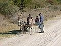 Donkey cart, Seronga, Botswana - panoramio.jpg