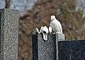 Doppelt traurig, grave Chvatik at Friedhof Hietzing 02.jpg