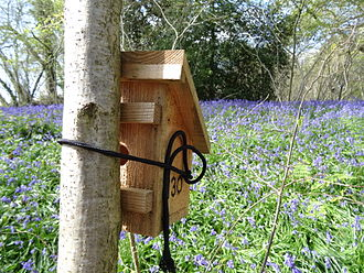 People's Trust for Endangered Species - Image: Dormouse box with bluebells at Briddlesford Nature Reserve