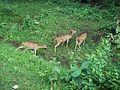 Dotted Deers.jpg