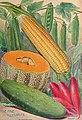 Dreer's 72nd annual edition garden book - 1910 (1910) (14592363108).jpg
