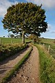 Driffield's lane, near Redbrook - geograph.org.uk - 606884.jpg