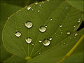 Droplets of water.jpg