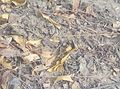 Dry leaves on ground.jpg