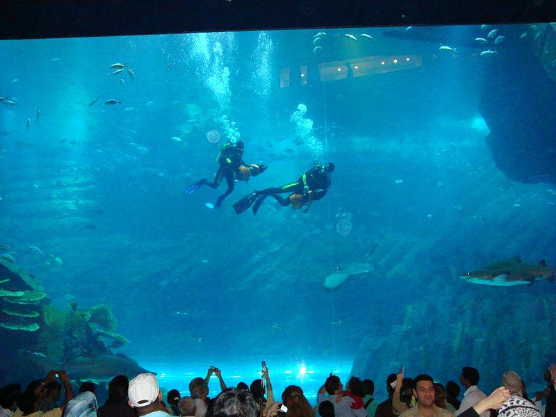 File:Dubai Mall Aquarium.jpg