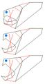 Dunkleosteus biomechanics.PNG