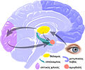 EQbrain optical stim gr.jpg