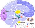 EQbrain optical stim gr.jpg