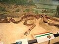 Edmontosaurus Exhibit Museum of Natural History.JPG