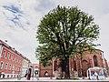 Eiche - Naturdenkmal 016-01 in Beelitz.jpg