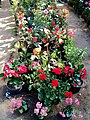 El Zohour Showroomمعرض الزهور بحديقة الاورمان 2.jpg