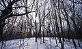 Elm Creek Park Reserve (2353498122).jpg