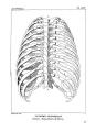 Encyclopédie méthodique - Systeme Anatomique, Pl14.png