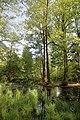 Erlenbruch Langwiesenholz 06.jpg