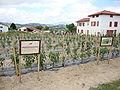 Espelette (Pyr-Atl. Fr) field of Espelette pepper.JPG