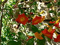 Fale - Giardini Botanici Hanbury in Ventimiglia - 677.jpg