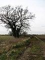 Farm track leading east - geograph.org.uk - 704286.jpg
