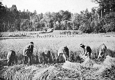 Farmers of forty centuries - Japanese farmers harvesting rice with sickles.jpg