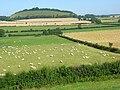Farmland, Maiden Bradley - geograph.org.uk - 909692.jpg