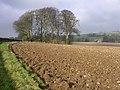 Farmland south of Dole's Ash Farm - geograph.org.uk - 95255.jpg