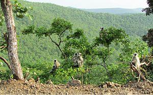 Janapav - This is the common sight while travelling to Janapav