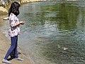 Feeding the Fish (36920122693).jpg