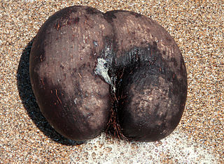 What Does Female Nut Look Like