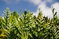 Ferns (Unsplash).jpg