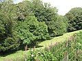 Field, Northfield - geograph.org.uk - 1455074.jpg