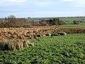 Field near Woodhead - geograph.org.uk - 306028.jpg
