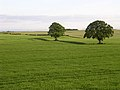 Fields of green and two trees - geograph.org.uk - 16827.jpg