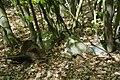 Findlinge im Salemer Moor.jpg