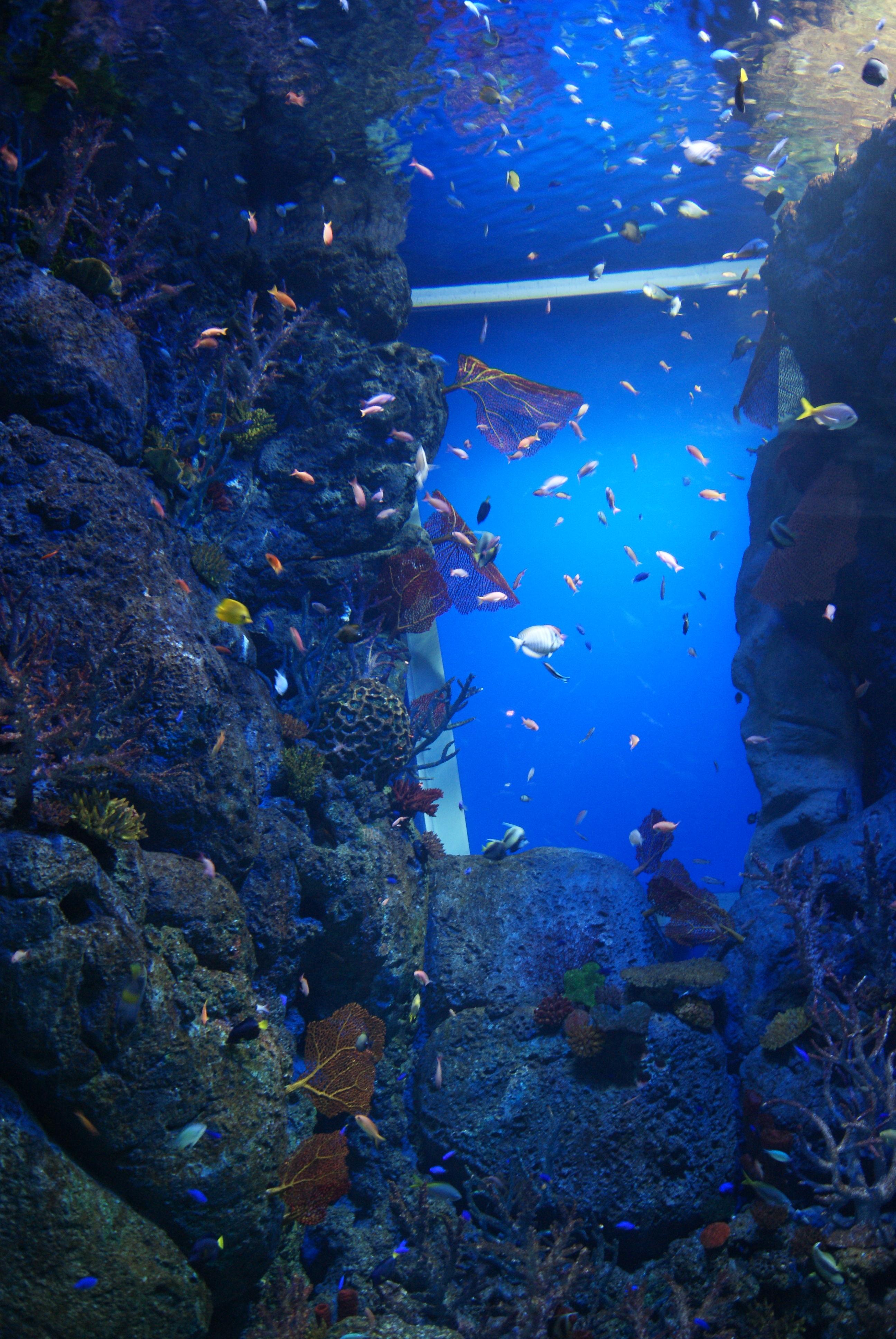 Fish aquarium in sentosa - File Fish In The S E A Aquarium Marine Life Park Resorts World Sentosa Singapore 20130105 08 Jpg